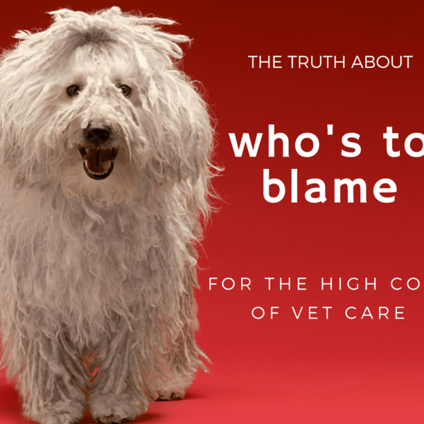 Here's Who I Blame for the High Cost of Vet Care