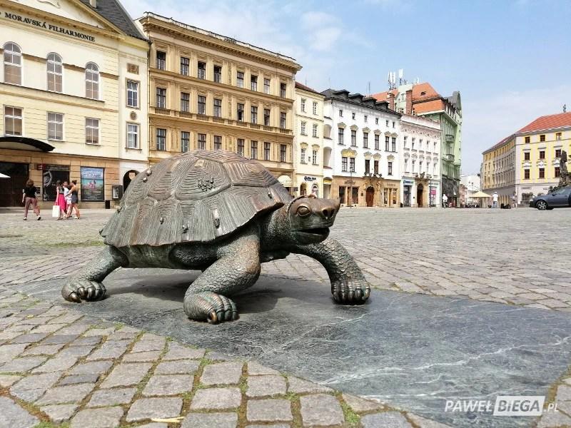 Ołomuniec - żółw