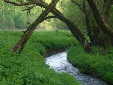 rzeka będkówka w pobliżu bramy będkowskiej w dolinie będkowskiej koło krakowa