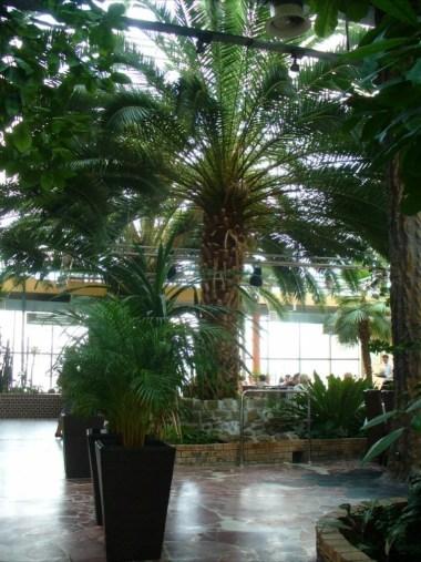 wnętrze palmiarni w zielonej górze, widoczne palmy