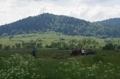 prace polowe prowadzone z użyciem konia w okolicach jaślisk w beskidzie niskim