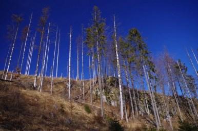 rezerwat przyrody kuźnie w beskidzie śląskim w okolicy magurki radziechowskiej