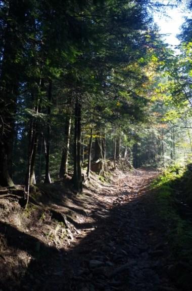 szlak z bieńkówki na koskową górę w beskidzie makowskim