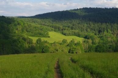 wzgórza nad darowem w beskidzie niskim, na szlaku do wernejówki