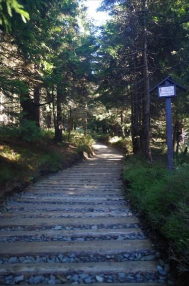 na szlaku z jaworzyny kamienickiej na turbacz w gorcach