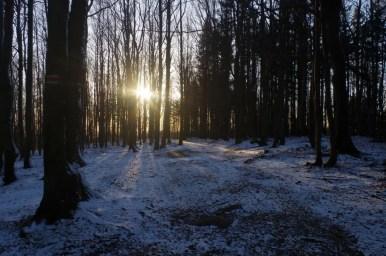 las w okolicach hali pisanej w beskidzie sądeckim