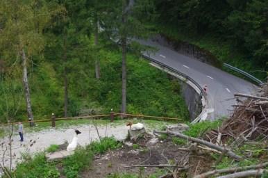 kozy w okolicy miejscowości podbrdo w alpach julijskich w słowenii