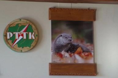 plakat z wydrą w schronisku na prehybie w beskidzie sądeckim