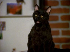 Salem – Sabrina the Teenage Witch | Famous Black Cats