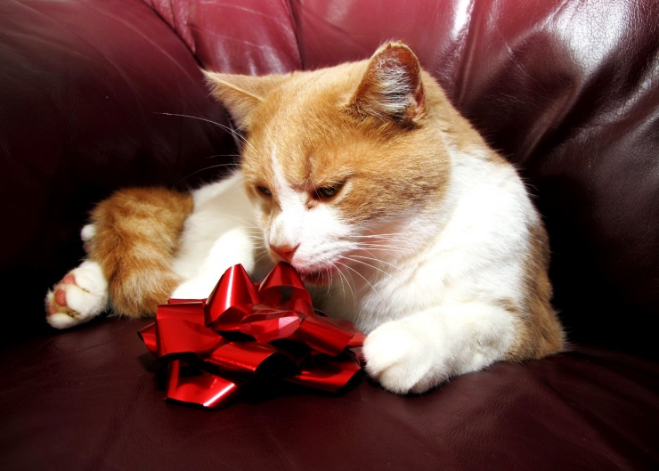 When considering a kitten as a Christmas gift, please think carefully to make sure it is a suitable gift for the recipient. A cat is for a lifetime   Should You Give a Kitten as a Christmas Gift?