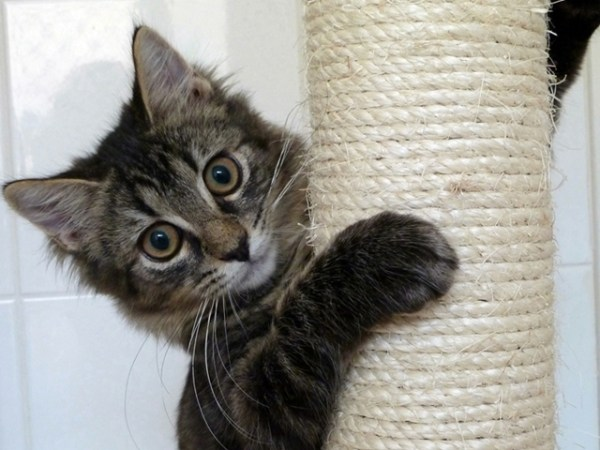 Before you bring your new kitten home, there are a few things you'll need which you'll be able to find at your local pet supplies store | Welcoming a New Kitten Into Your Home
