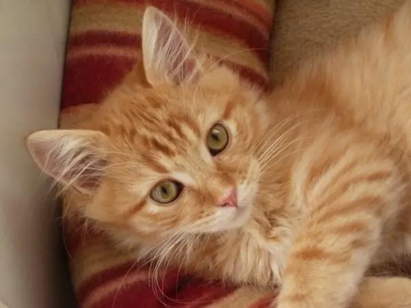 Amber the kitten