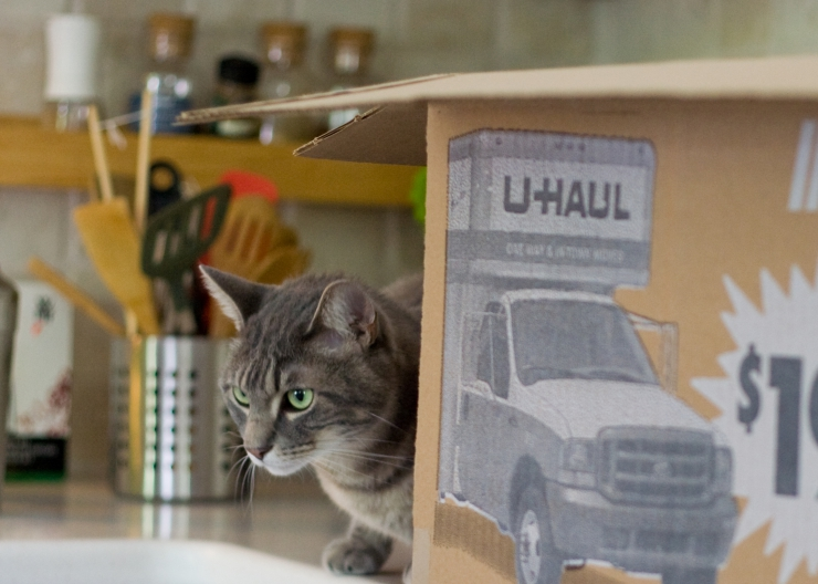 Move House with Your Cat – Stress Free!petbucket.com