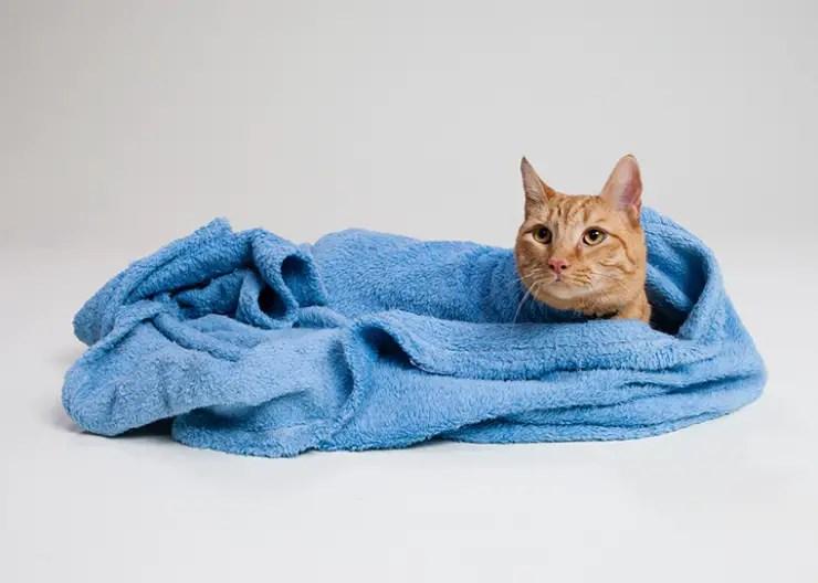 feline first aid kit