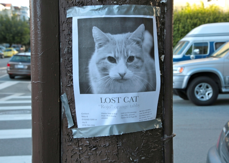 lost cat stay calm and develop a detailed search plan based on your cats personality