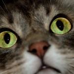 Fact or Fiction? Five Common Myths About Cats