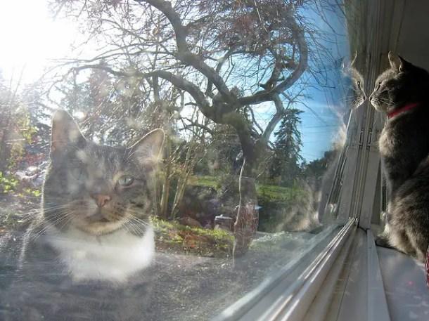 Indoor and outdoor cat reflections
