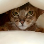 Stress and Anxiety in Cats