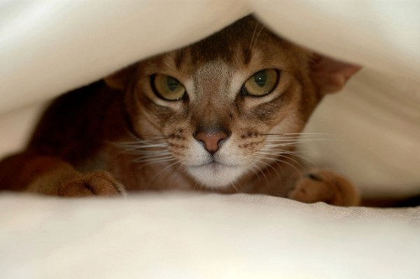 Is your cat constantly finding places to hide? | Why Do Cats Hide? Dangerous Cat Hiding Places