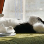 Why Cats go Crazy for Catnip