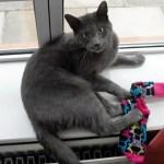 Kleptomaniac Kitties: Cats That Steal