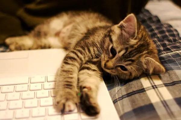 Kitten_3