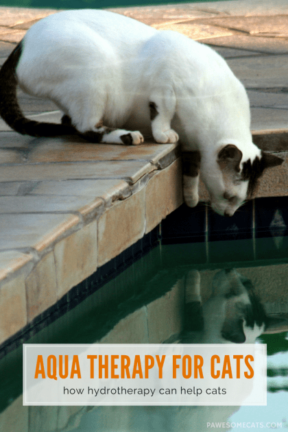 Hydrotherapy (aqua therapy) can be beneficial in treating many feline health issues including arthritis, obesity and helping recovery from surgery or injury | How Hydrotherapy Can Benefit Your Cat
