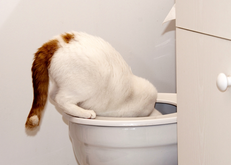 Why would a cat choose to drink toilet water when there's a fresh bowl of water available to him?   Help! Why Does my Cat Drink from the Toilet?