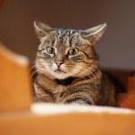 Why Do Cats Hide? Dangerous Cat Hiding Places