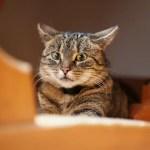 Why Do Cats Hide? Dangerous Cat Hiding Places
