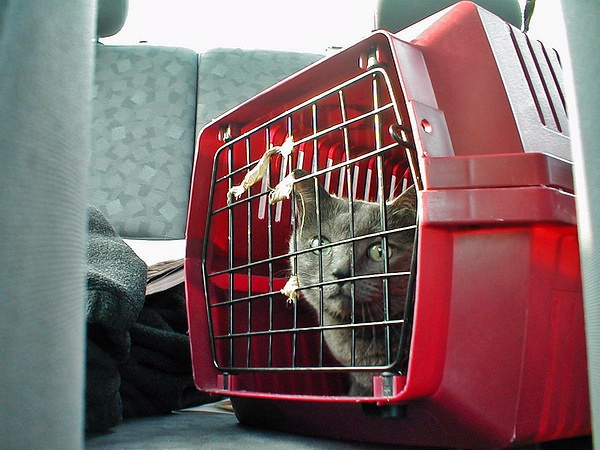 Get your cat used to being in the carrier and inside the car - you don't have to turn the engine on initially | 7 Steps to Get your Cat Used to the Cat Carrier