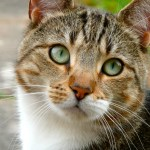"""The Terrific Tabby Cat and the Mystery of the """"M"""""""