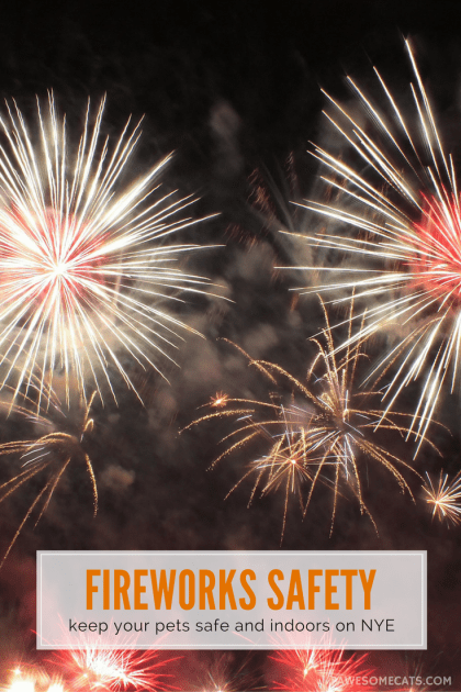 Keep your pets inside and safe during fireworks and NYE celebrations | Summer Safety for Cats: Fireworks and New Year Celebrations