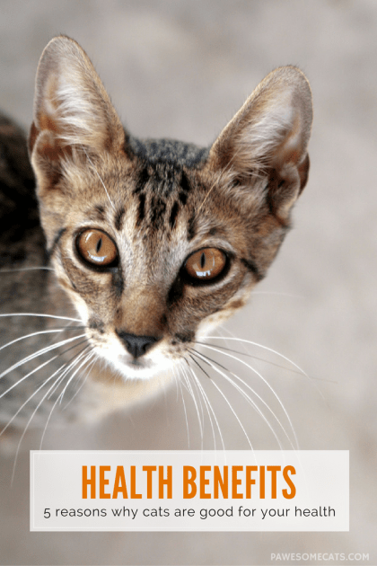 There have been a number of scientific studies conducted that report cat owners visit the doctor less, have a reduced risk of heart disease, and many more amazing things | 5 Reasons Why Your Cat is Good for Your Health