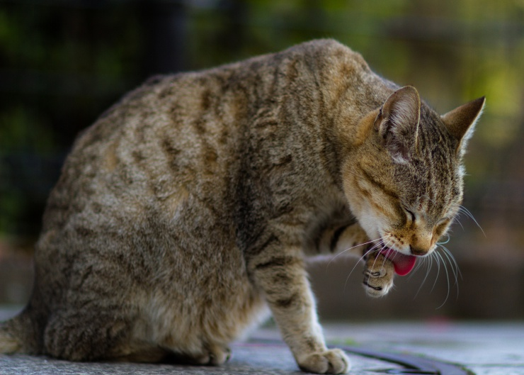 If you've got a geriatric cat 15 years or over you probably already know that she needs extra special care and attention to make sure that her twilight years are happy and comfortable | Pensioner Puss: Caring for an Elderly Cat