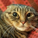 Does Your Cat Need a Therapist?  Seeking Help From a Cat Behaviourist