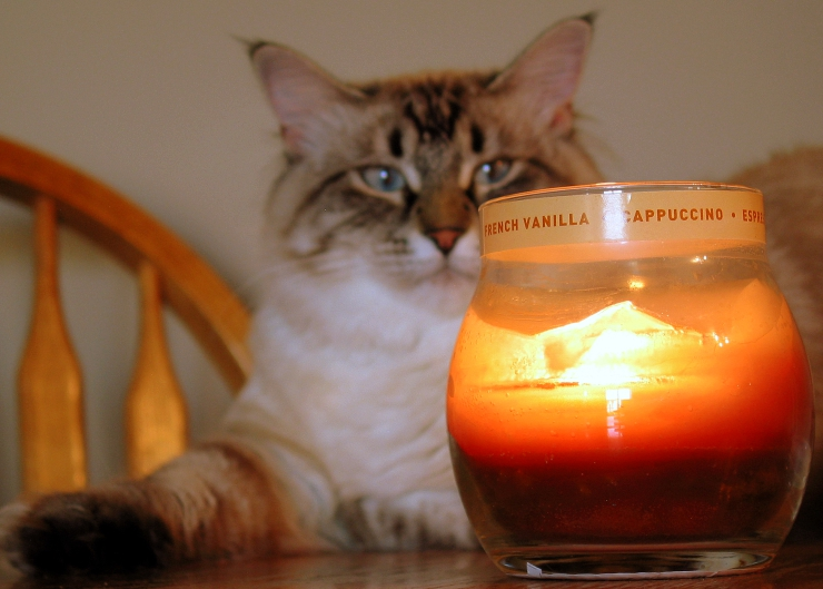 How to protect and keep your pets safe during summer bushfires, and our pet fire safety tips to help prevent accidental fires from starting in the home | Pet Fire Safety Day - How to Keep Your Pets and Home Safe