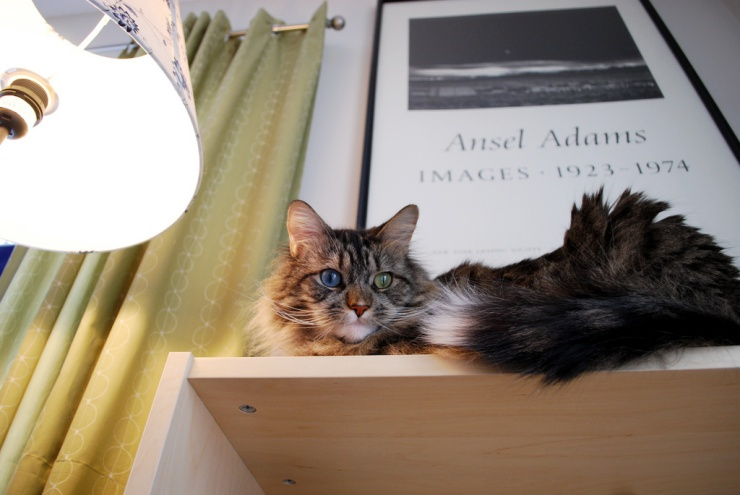 Keeping your cat in an apartment doesn't need to restrict his lifestyle | Best Cat Breeds for Apartment Living