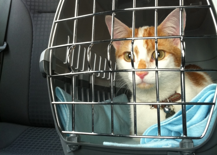 Car travel with cats is rarely stress-free. What do you do to ensure a safe and comfortable journey for your cat? | Secrets to Successful Car Travel With Cats