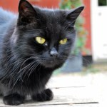 Feline Asthma and Bronchitis: Triggers and Treatment