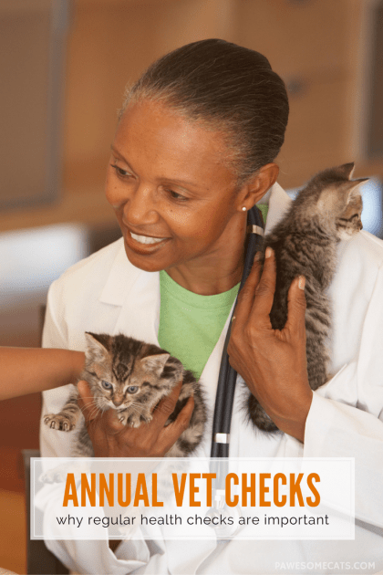 How often do you get your cat checked by the vet? | Why Annual Health Checks are Important for Pets