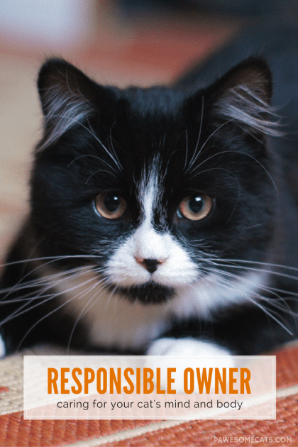 Being a responsible pet owner means taking care of both the emotional and physical needs of your cats – it's a lifetime commitment! | What it Means to be a Responsible Cat Owner