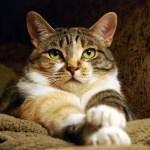 Understanding Epilepsy and Seizures in Cats