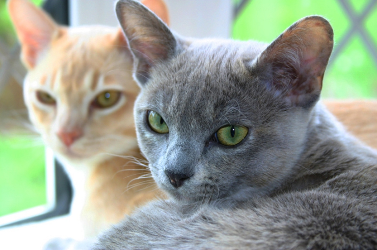 Understanding FIP -- the clinical signs, how it is transmitted between cats and how vets diagnose this condition   Signs and Symptoms of Feline Infectious Peritonitis (FIP)