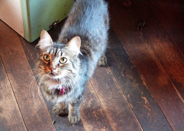 Many health problems in older cats can be treated or controlled, so spotting a problem early is good news for your cat   Common Illnesses Older Cats are More Likely to Experience
