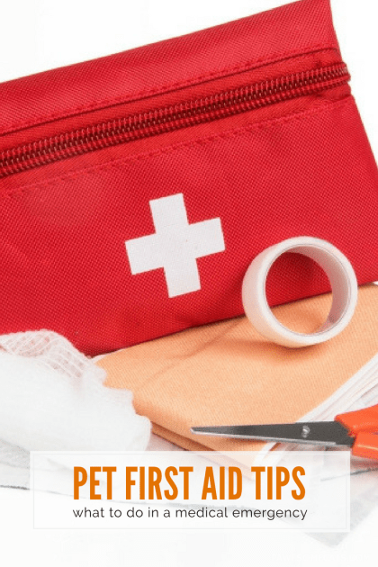 The first rule of pet first aid is to recognise when to act or when to leave well alone and get straight to the vet clinic   Pet First Aid Tips: What to Do in an Emergency