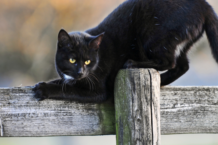 active black cat outdoors