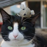 Earth Day: How to be an Eco Friendly Pet Owner