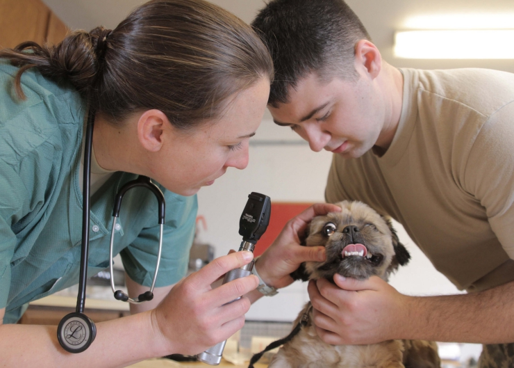 Is being a vet your dream job? Veterinarian, Dr Pippa Elliott provides an insider's view on what it really takes to follow a career in veterinary medicine | So You Want to Be a Vet? Here's What you Need to Know
