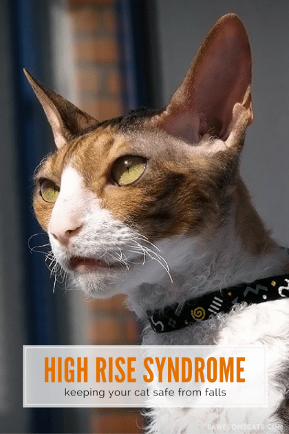 We discuss window safety, balcony basics, cat enclosures and verandas to keep your cat safe | High Rise Syndrome: Keeping your Cat Safe from Falls